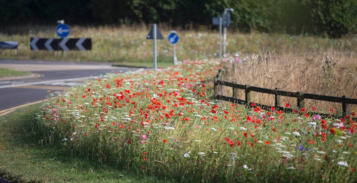 Wild Flowers Durham County Council