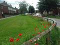Wildflowers - Chester-le-Street 2017