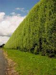 High Hedges