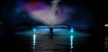 Lumiere 2015 Mysticete (whale)